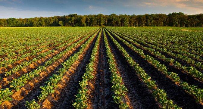 434b6f18-0105-47b9-8064-3abdb33404d7_shutterstock_32185693_aardappelveld_akker_aardappelplant_akkerbouw_LR_674x362