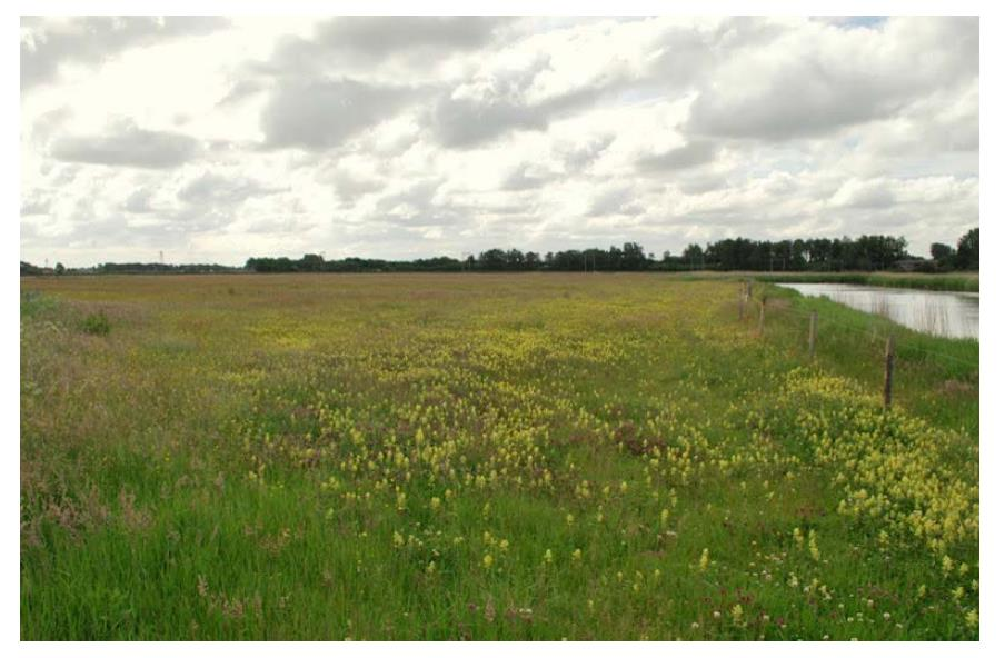 Castricum-schoonwater-vegetatie