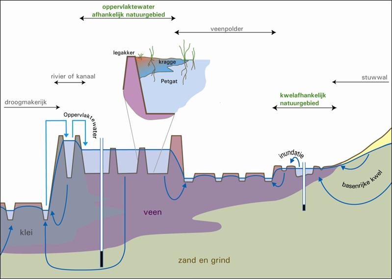 Hydrologische positie van laagveennatuurgebieden
