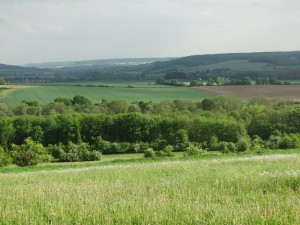 Roodborn-landschap-DSC01853